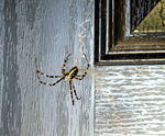 Spider #2 at the front door