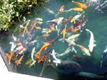 Fish gathering for the feeding frenzy